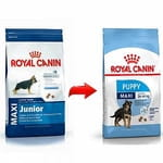 Royal Canin Size Maxi Junior Cane 15 Kg