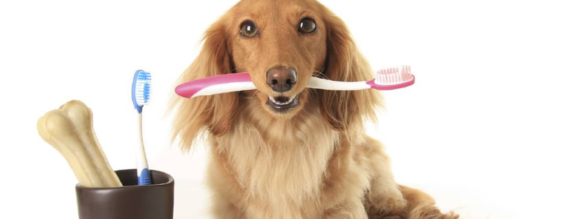 Dentifricio per cani: come fare il dentifricio naturale in casa